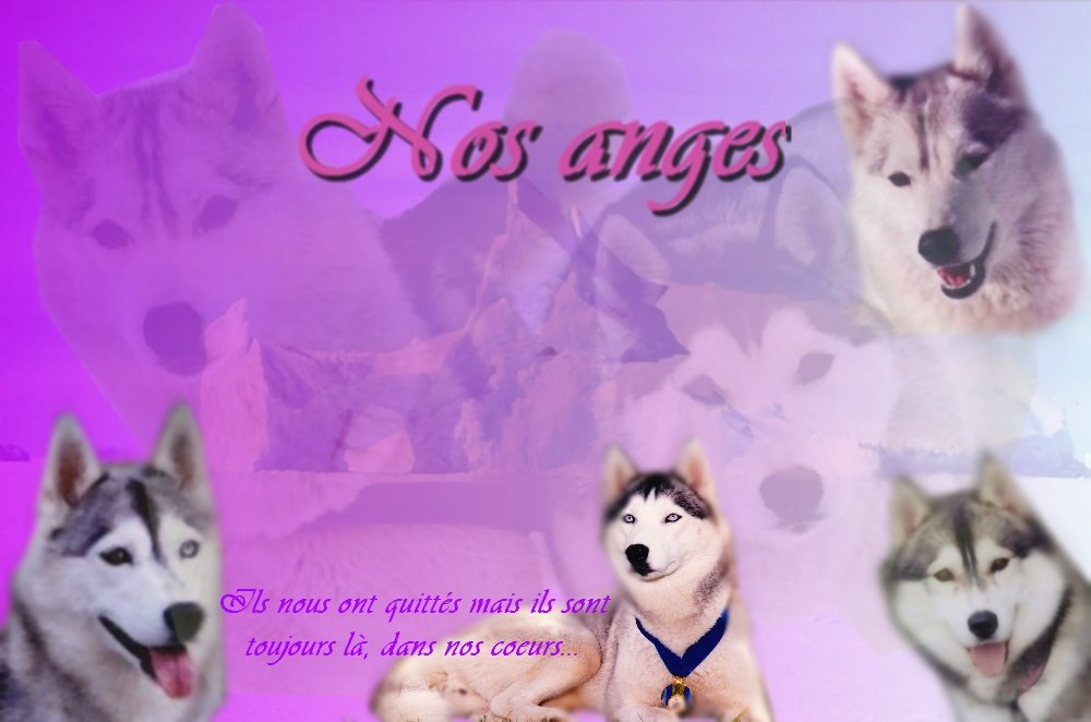 nos anges