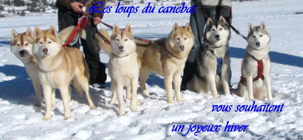 Husky à Toulon