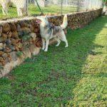 chiot husky marseille