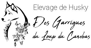 Elevage de Husky Des Garrigues du Loup du Canebas
